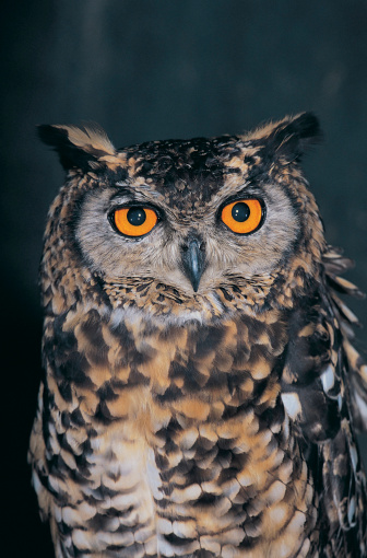 Are Owls Connected To The New Age Women Of Grace