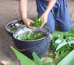 "Ayahuasca ""tea' being prepared"