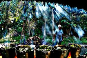"Master shaman Don Alberto prepares ""tea"" at Blue Morpho Retreat Center in Peru."
