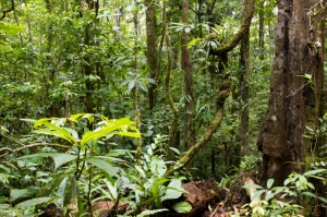 Tropical rainforest in Ecuadoran Amazon
