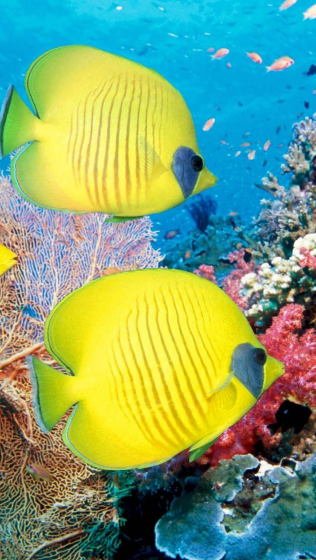 ... fish-TropicalYellow